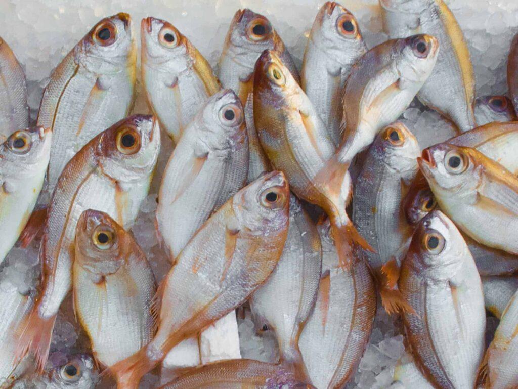 Kratek rok ribe